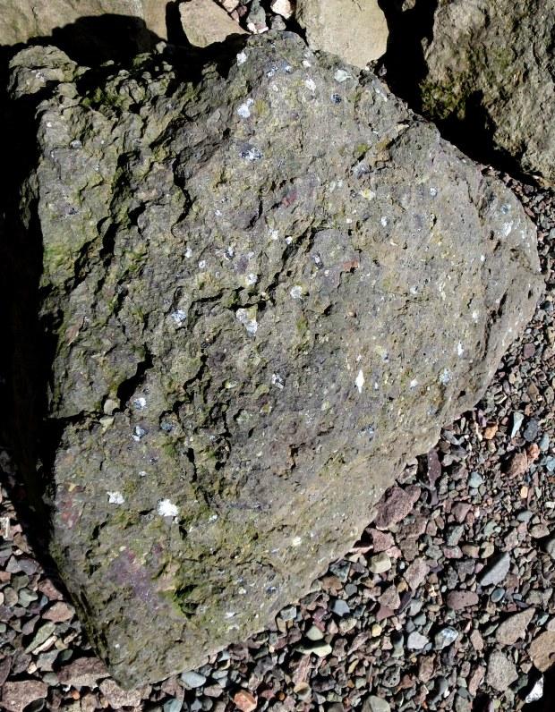 Fossilized clam shells, Wasson Bluff, Parrsboro, Nova Scotia, Canada