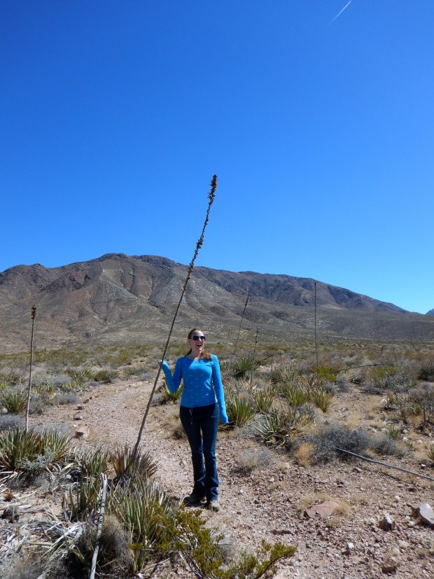 Chrissy making music by rattling a dried yucca plant, Lower Sunset Trail, Franklin Mountains State Park, El Paso, Texas