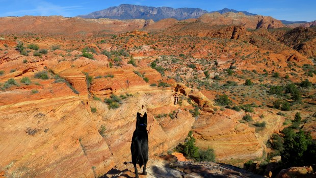 Abby surveying, Red Cliffs National Conservation Area, Utah