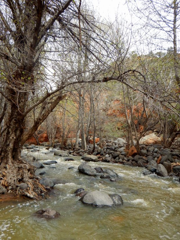 Wet Beaver Creek, Bell Trail, Wet Beaver Wilderness, Coconino National Forest, Arizona