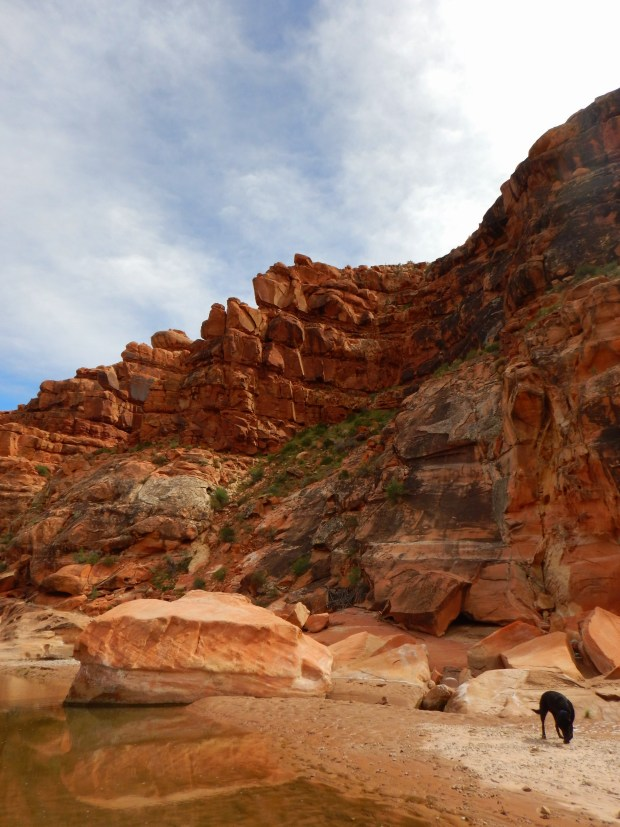 Canyon walls, Virgin River Canyon Recreation Area, Arizona