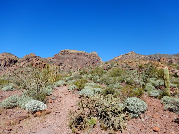 Bull Pasture Trail, Organ Pipe Cactus National Monument, Arizona