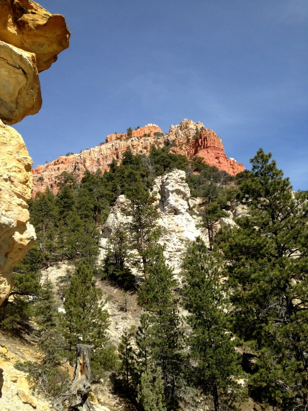 Red sandstone towering above, Dixie National Forest, Utah