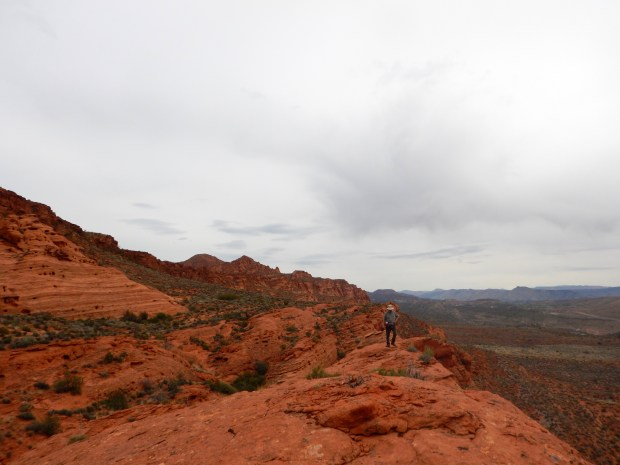 Terry looking down on the tree and the basin, Red Cliffs National Conservation Area, Utah