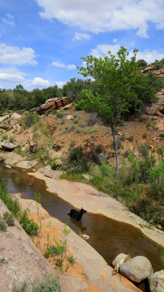 Stream crossing, Red Cliffs Conservation Area, Utah