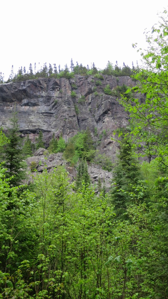 Looking up, Orphan Lake Trail, Lake Superior Provincial Park, Ontario, Canada