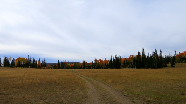 Walking some forest roads and meadows, Dixie National Forest, Utah