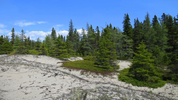 Dunes from Beach Trail, Pukaskwa National Park, Ontario, Canada