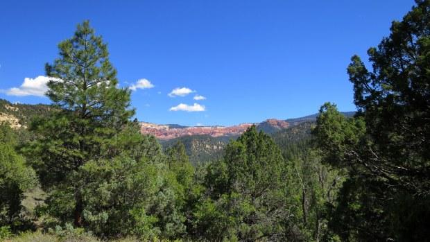 Looking back to Cedar Breaks from Rattlesnake Trail, Ashdown Gorge Wilderness, Dixie National Forest, Utah
