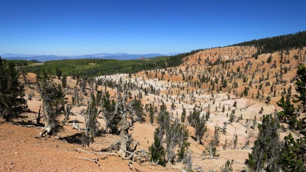 Twisted Forest, Ashdown Gorge Wilderness, Dixie National Forest, Utah