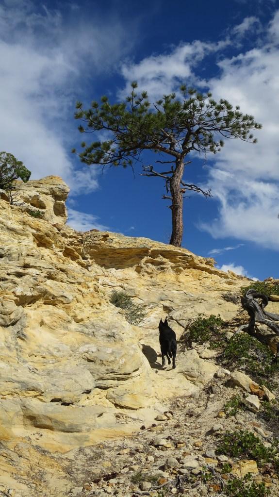 Vermillion Castle Trail, Dixie National Forest, Utah