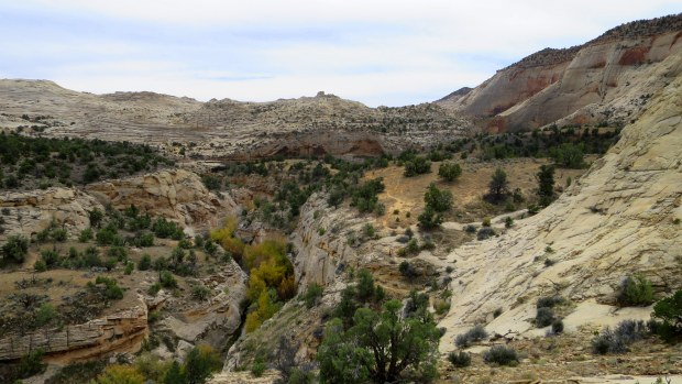 Overlooking a tributary of Deer Creek in the canyon below, Burr Trail, Grand Staircase-Escalante National Monument, Utah