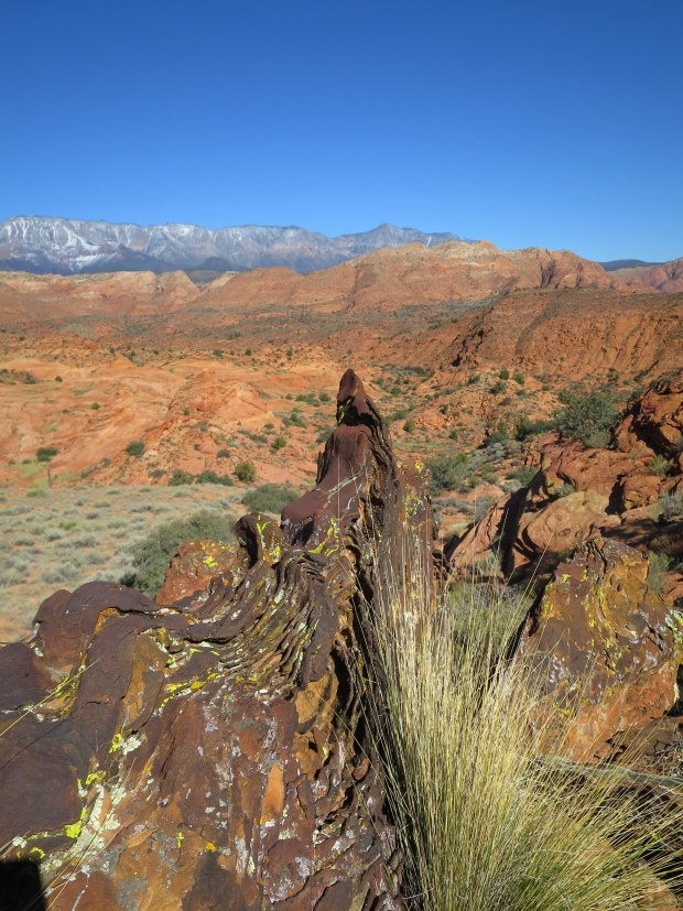 More twisted iron deposits, Red Cliffs National Conservation Area, Utah