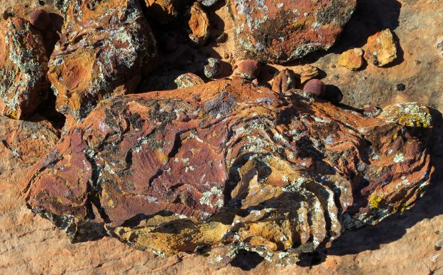 More iron oxide in the sandstone, Red Cliffs National Conservation Area, Utah