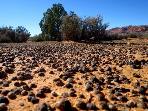 Moqui marbles, off Gila Trail, Snow Canyon State Park, Utah