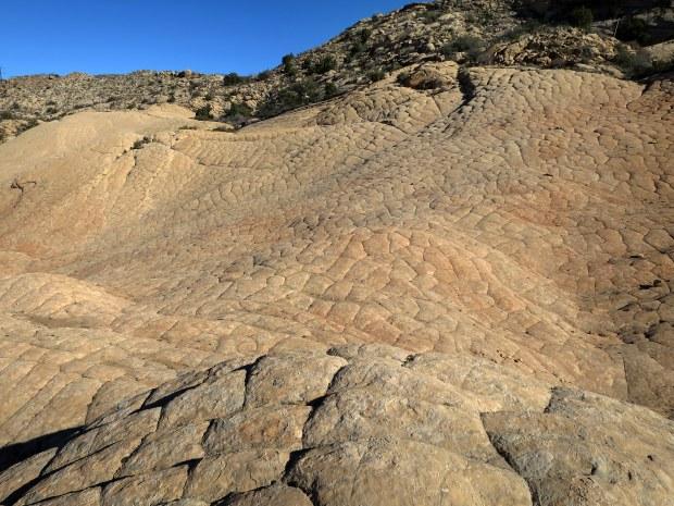 Checkerboard, Yellow Knolls Trail, Red Cliffs Desert Reserve, Utah