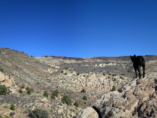 Abby surveying, Red Cliffs Desert Reserve, Utah