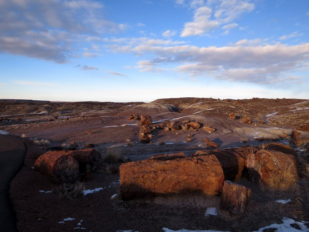 Crystal Forest, Petrified Forest National Park, Arizona