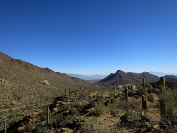Tucson Mountain Park, Arizona