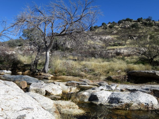 Molino Canyon, Coronado National Forest, Arizona