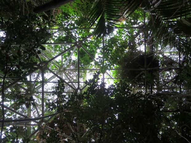Inside the rainforest biome, Biosphere 2, Arizona