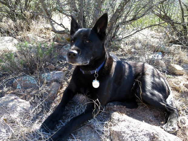 Abby waits for us in the shade, Baylor Pass Trail, Organ Mountain-Desert Peaks National Monument, New Mexico