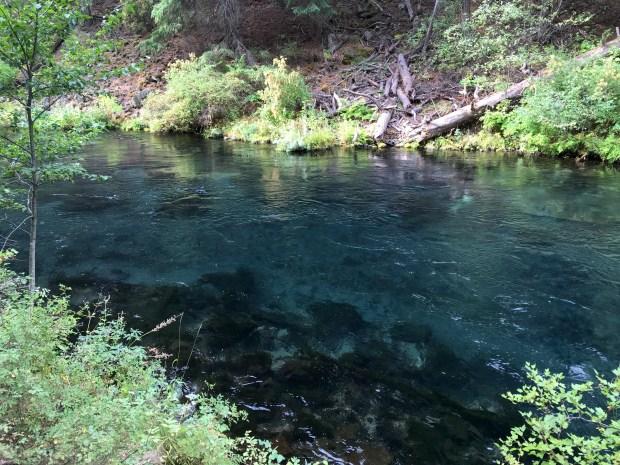 2016-09-08-oregon_redwoods_iphone-051