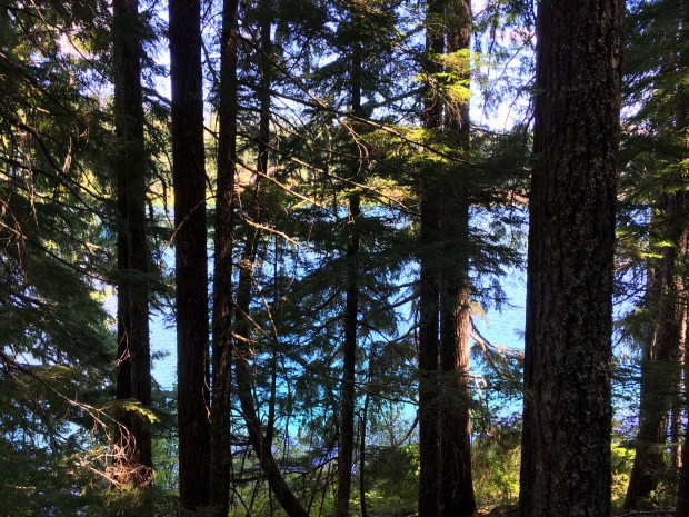 2016-09-08-oregon_redwoods_iphone-103