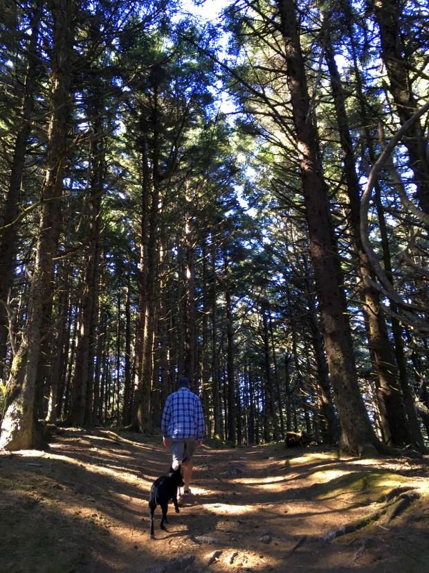 2016-09-08-oregon_redwoods_iphone-229
