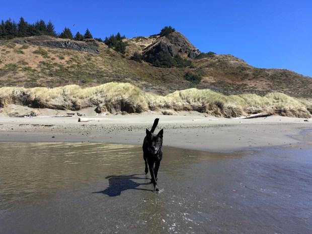 2016-09-08-oregon_redwoods_iphone-254