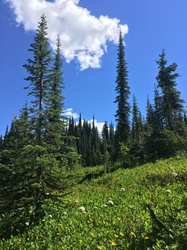 Banff_Jasper_iphone 2518