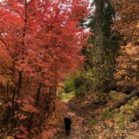 Finding the Maples