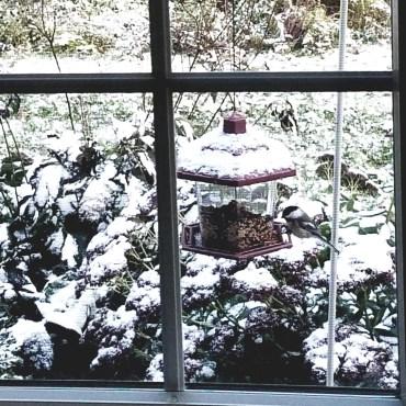 First Snow 10-18-2018