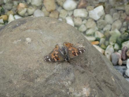 04152019 Butterfly without a Flower Brookgreen Gardens