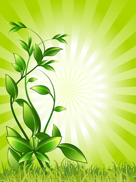 plant-158798_640
