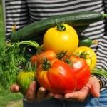 有機農業ってなんやろう。無農薬栽培?自然農法?いろいろあってややこしいから調べてみた♬
