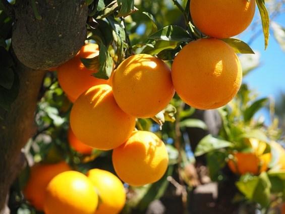 oranges-1117615_640