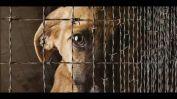 Condenaron a la mujer que abandonó a un perro al fondo de su patio sin alimento