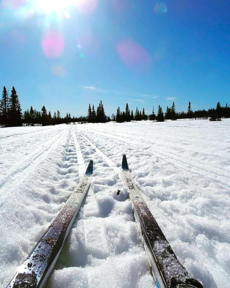 Skidtur på längskidor i vårvintersolen. Foto © Britta Olofsson.