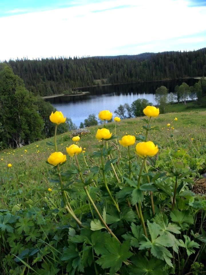 Smörbollar vid Fjällägenheten Bågavattnet i Hotagsbygden. Foto © Mariana Tarander.