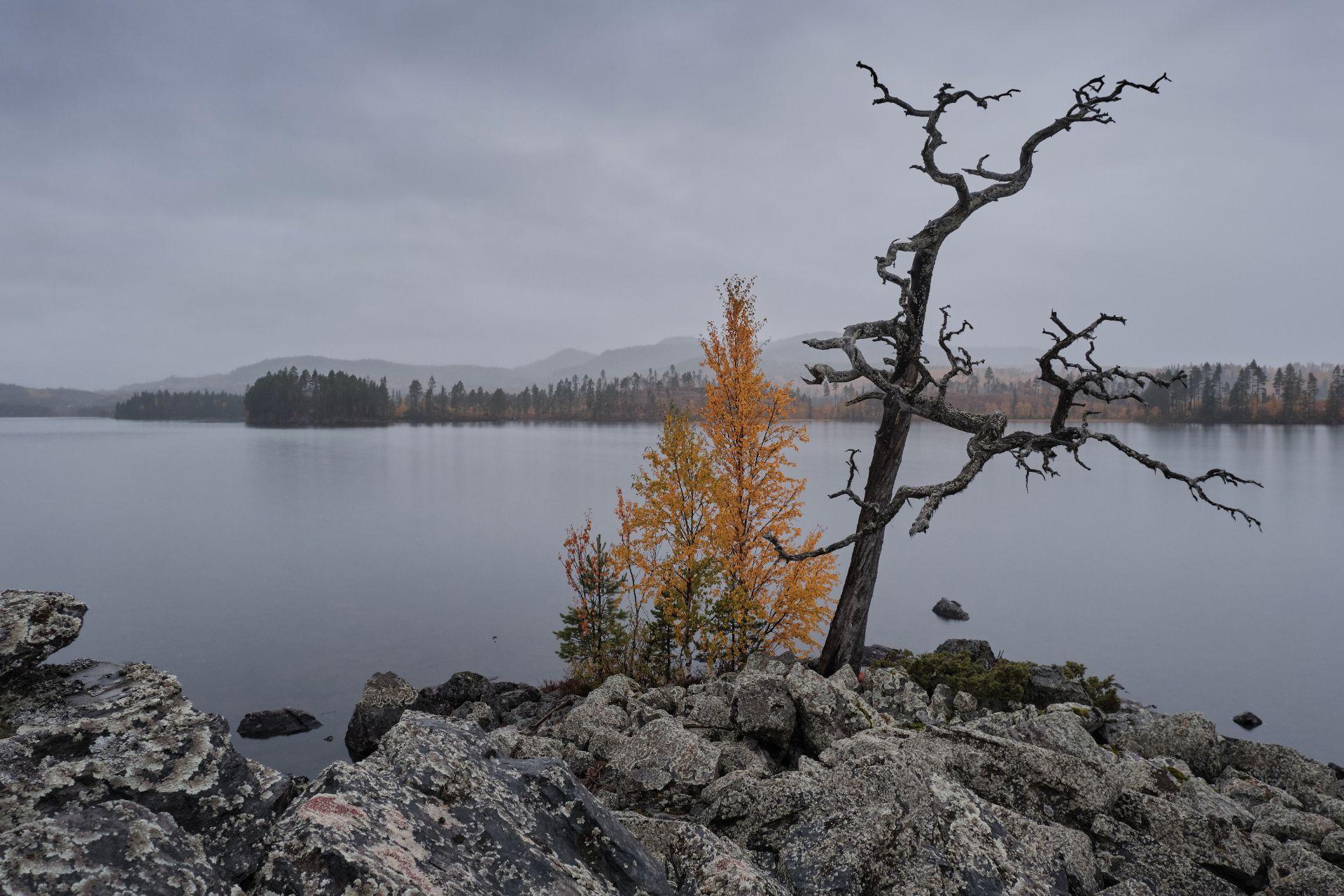 Stor-Kingen i Hotagsbygden. Foto © Jörgen Språng.