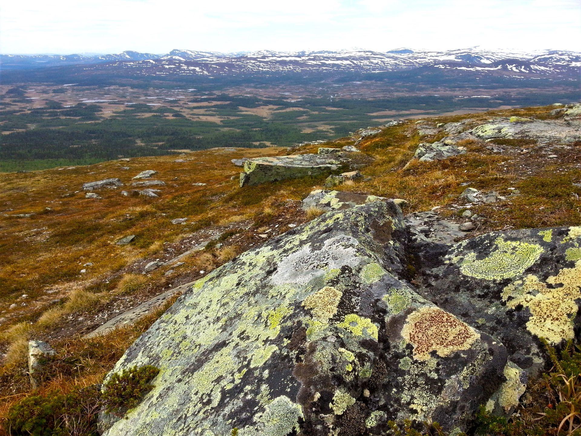 KARTLAV Rhizocárpon geográphicum och VINDLAV Haematómma ventósum Foto © Rut Magnusson