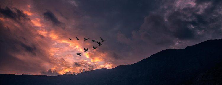 El Hierro, 100 Days of Freedom