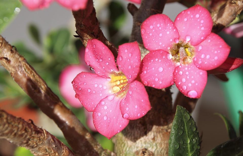 Resultado de imagem para flor no deserto