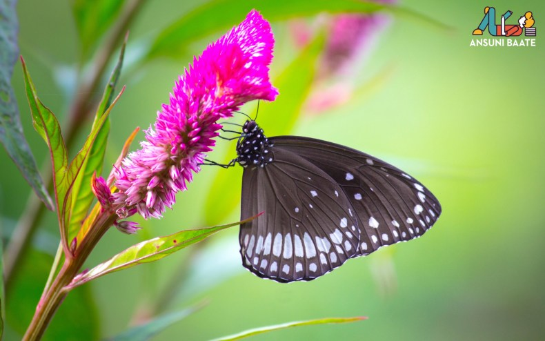 butterfly images download hd, बटरफ्लाई इमेज,बटरफ्लाई फोटो, ,3d butterfly wallpaper free,high quality amazing butterfly wallpaper, best butterfly images free download,,बटरफ्लाई इमेजेस,butterfly drawing,बटरफ्लाई ड्राइंग
