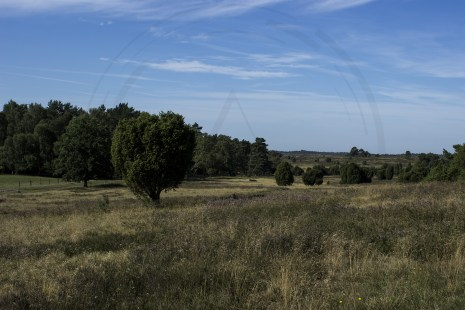 Lüneburger Heide (3)