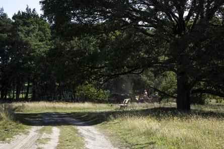 Lüneburger Heide (7)
