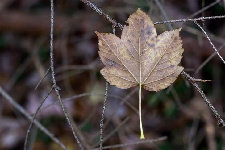 Herbstliches Petergensfeld (5)