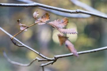 Herbstliches Petergensfeld (8)