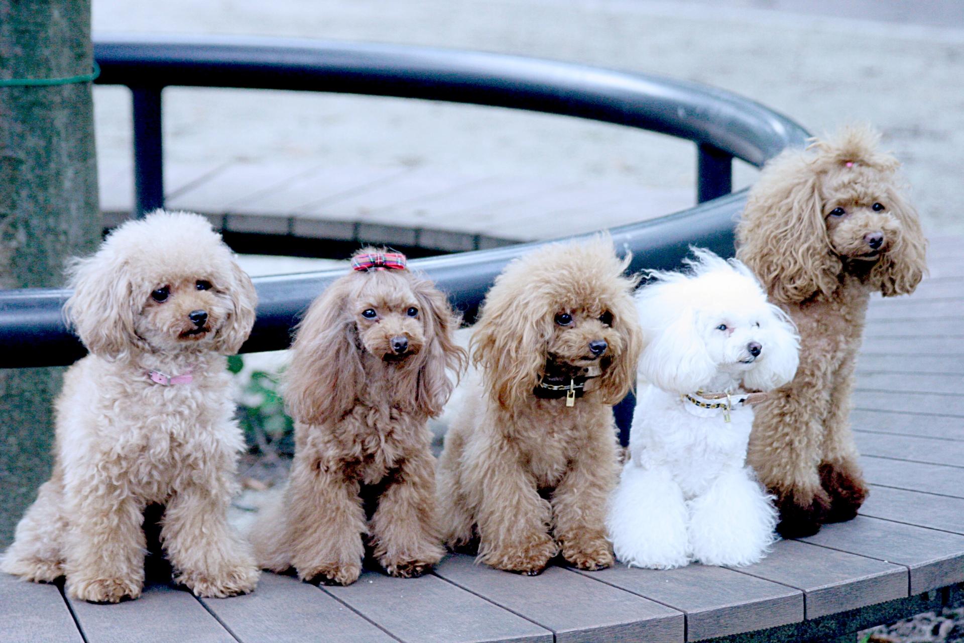犬と暮らす!オスとメス飼いやすいのはどっち?